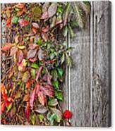 Autumn Vine Canvas Print