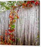 Autumn Vines Canvas Print