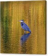 Autumn Watcher Canvas Print