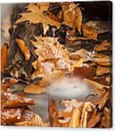 Autumn Water Eddy Canvas Print