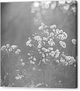 Autumn Weeds Canvas Print