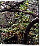 Autumn Wild Nature Denmark Canvas Print