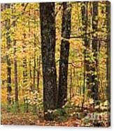 Autumn Woods 1 Canvas Print