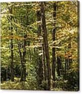 Autumn Woods II Canvas Print