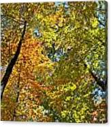 Autumn Woods Sky View Canvas Print