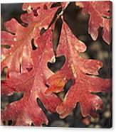 Autumnal Face Canvas Print