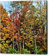 Autumnal Foliage Canvas Print