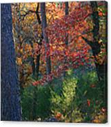 Autumnal Rock Canvas Print