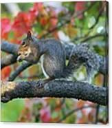 Autumnal Squirrel Canvas Print