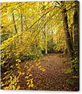 Autumnal Woodland II Canvas Print