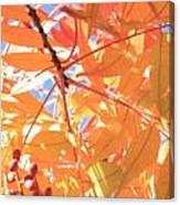 Autumn's Array 24 Canvas Print