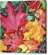 Autumn's Carpet Canvas Print