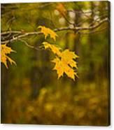 Autumns Fast Approach Canvas Print