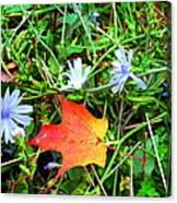 Autumns First Leaf Canvas Print
