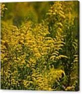 Autumn's Gold 2013 Canvas Print