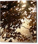 Autumns Golden Morning Canvas Print