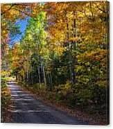 Autumns Road Canvas Print