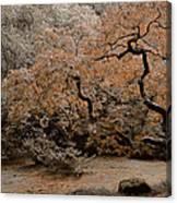 Autumn's Touch Canvas Print