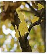 Autumn's Wondrous Colors 1 Canvas Print