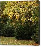 Autumn's Wondrous Colors 4 Canvas Print