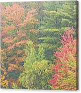Autumntrees And Fog Canvas Print