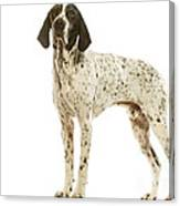 Auvergne Pointer Canvas Print