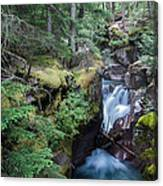 Avalanche Creek In Cedar Forest Canvas Print