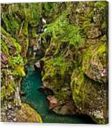 Avalanche Gorge In September Canvas Print