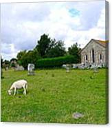 Avebury Stones And Sheep Canvas Print
