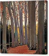 Avenue Of Plain Trees Canvas Print