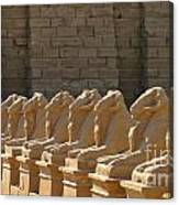Avenue Of Sphinxes Canvas Print