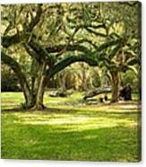 Avery Island Oaks Canvas Print