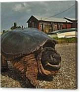 Avon Harbor Large Turtle 1 6/07 Canvas Print