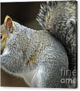 Aw Nuts Canvas Print