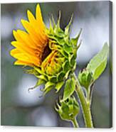 Awe What The Heck Canvas Print