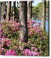 Azalea At The Lake Canvas Print