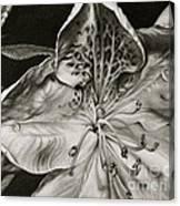 Azalea Canvas Print
