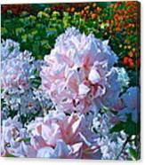 Azalea Paradise Canvas Print