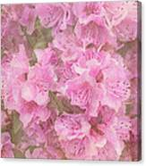 Azalea Textured Canvas Print