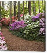 Azalea Trail Canvas Print