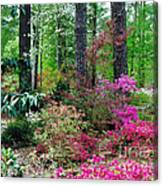 Azaleas Red Maple And Magnolia Trees Canvas Print