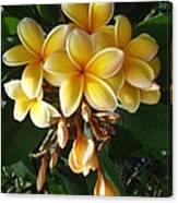 Aztec Gold Plumeria Canvas Print