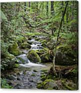 Babbling Baxter Brook Canvas Print