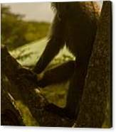 Baboon In Tree Canvas Print