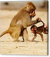 Baboon With Baby Canvas Print