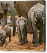 Baby African Elephants II Canvas Print