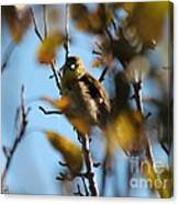 Baby American Goldfinch Learning To Fly Canvas Print
