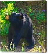 Baby Bear Cub Canvas Print