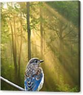 Baby Blue In Morning Fog Sunlight Canvas Print