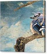 Baby Blue Jay In Winter Canvas Print